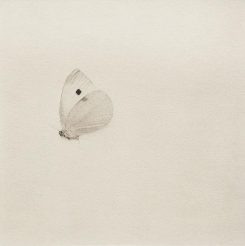 Yoshie Nishikawa An Abstract Shogyou mujyo / Tutto scorre